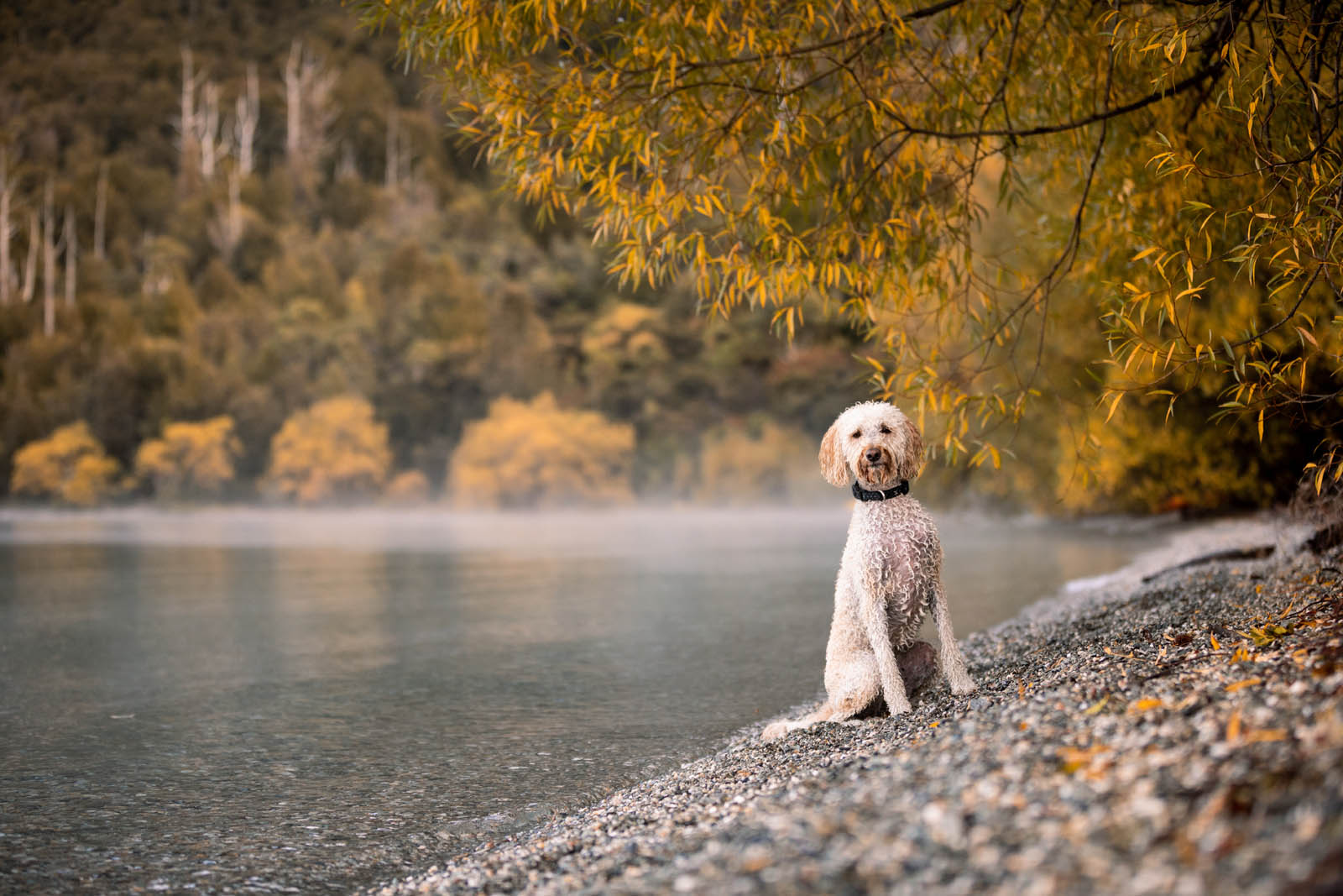 NYC Dog Photography