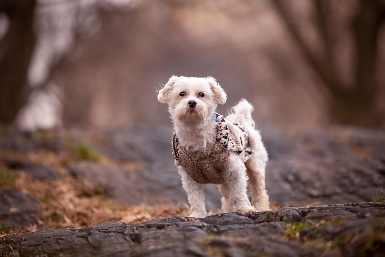 Wiley - NYC dog photographer