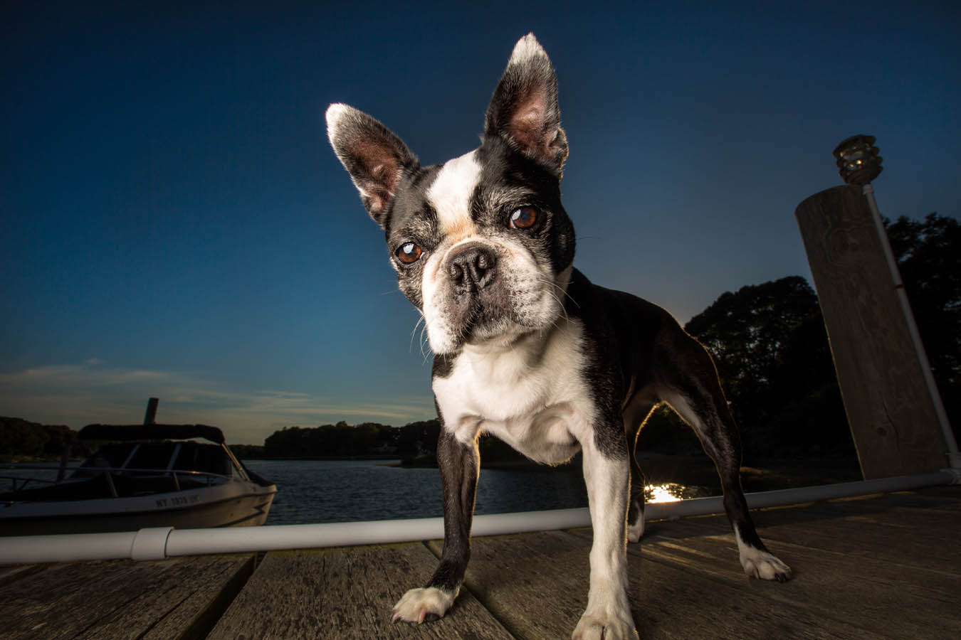 New York Dog Photographer