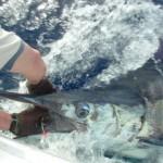 blue-marlin-photo-3