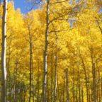 Colorado Fall Leaves