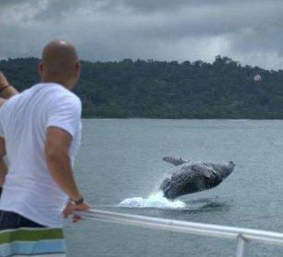 activities in uvita whale jump uvita costa rica