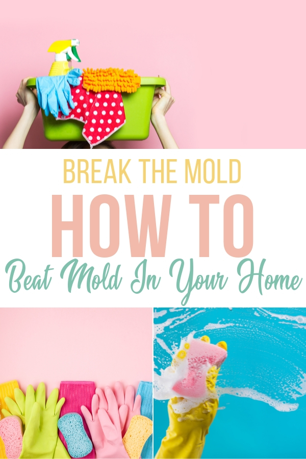Break The Mold: How To Beat Mold In Your Home