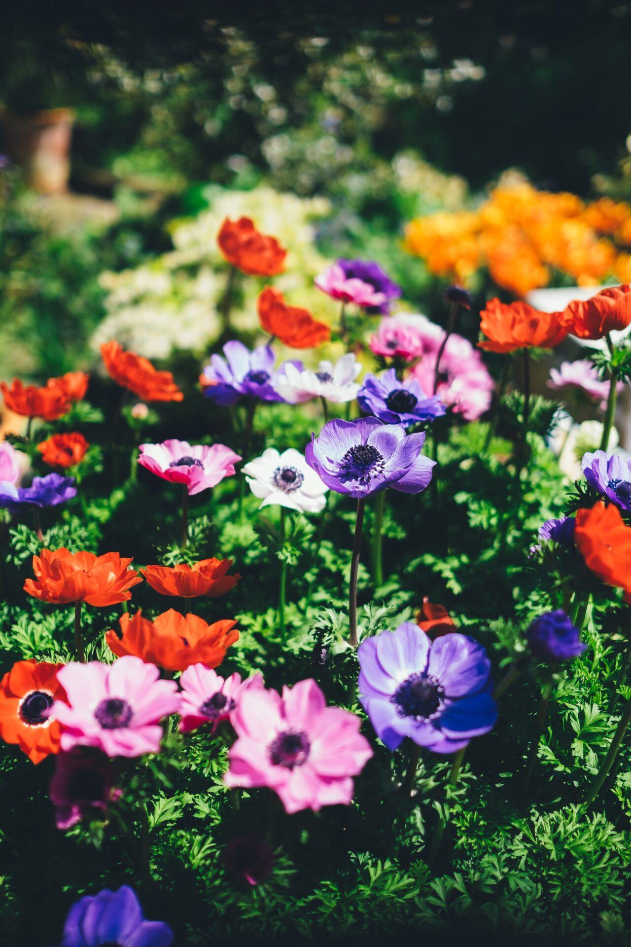 Ideas For Garden Buildings