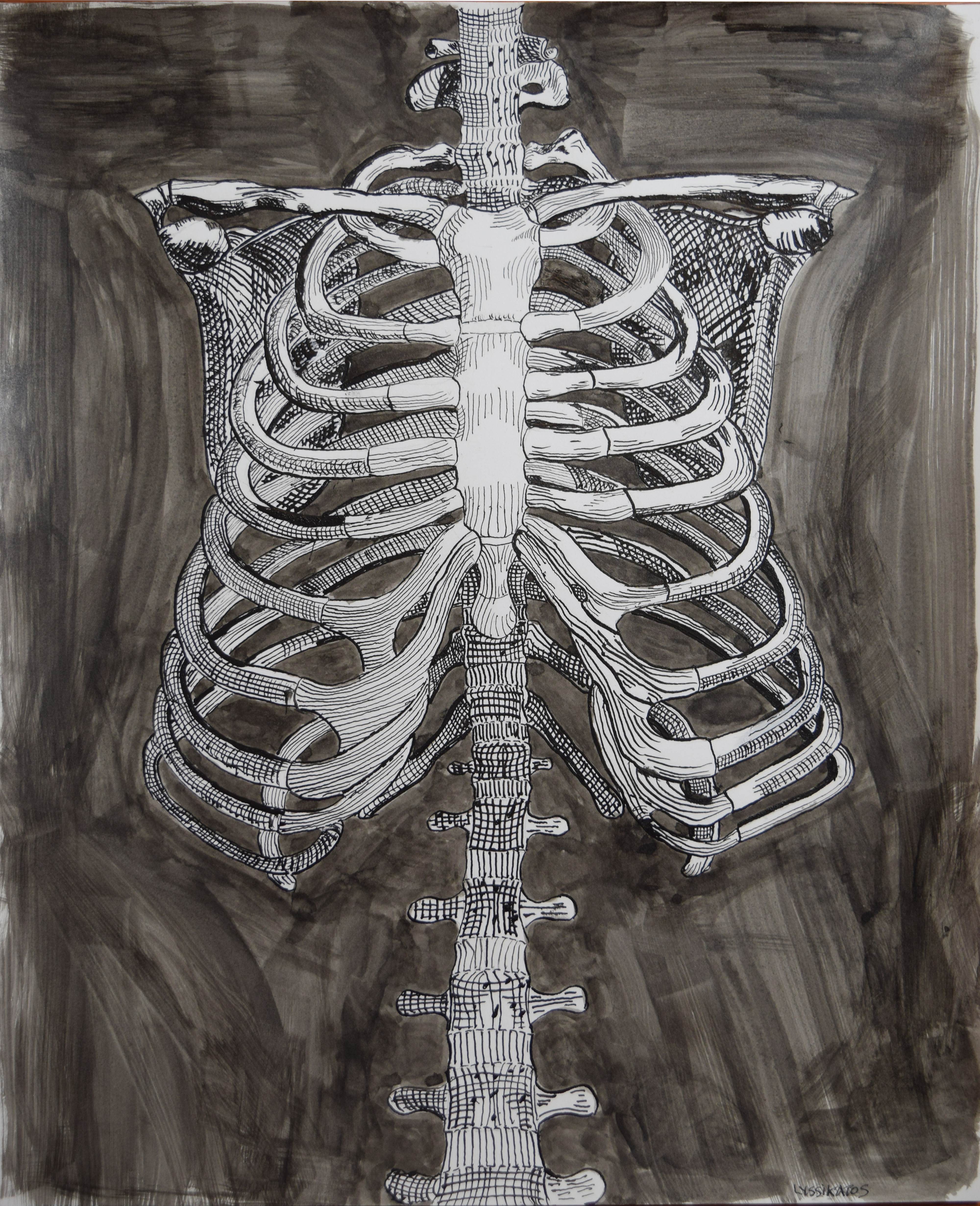 Rib Cage - Ink on vellum - 11 x 14 in.