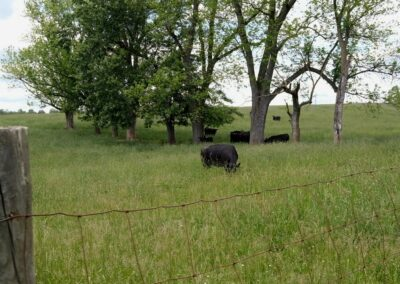 farms-for-sale-in-virginia-131