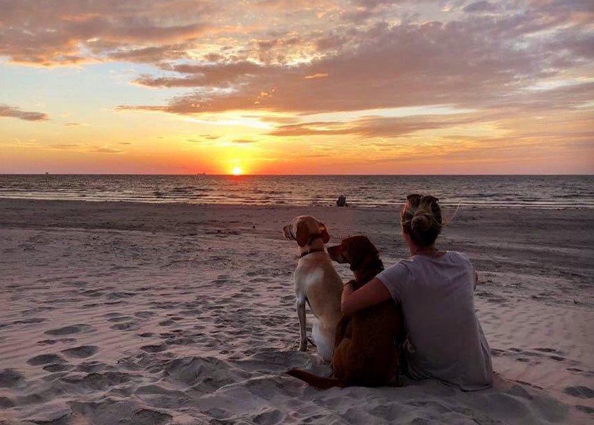 Dogs - CHECK; Beach - CHECK; Sunset - CHECK