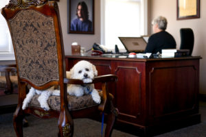 BFL Therapy Dog Featured in Super Lawyers Magazine