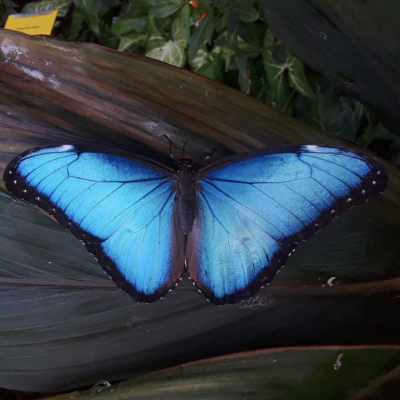 The Key West Butterfly & Nature Conservatory with George Fernandez