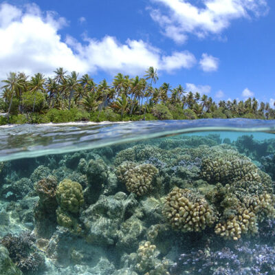 Improving & Protecting Our Coral Reef with Reef Relief