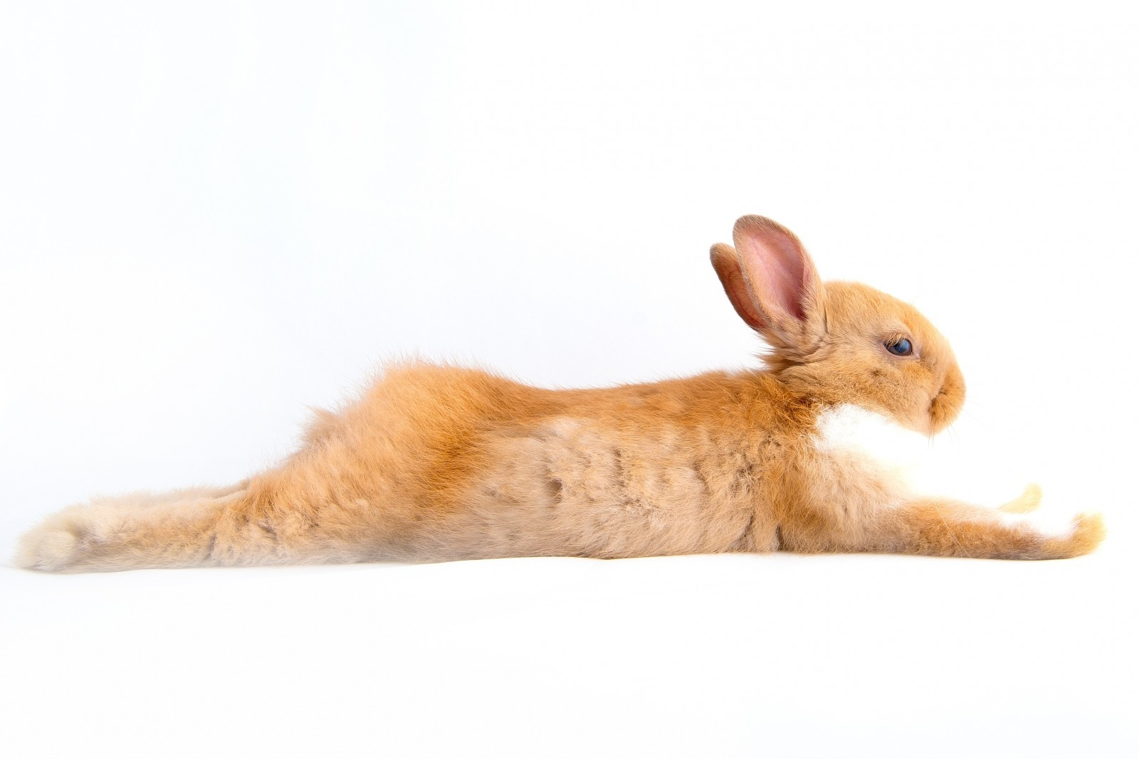 What Killed The Bunnies? The Importance Of Causation