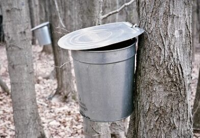 It's Maple Sugaring Time in Western Pennsylvania