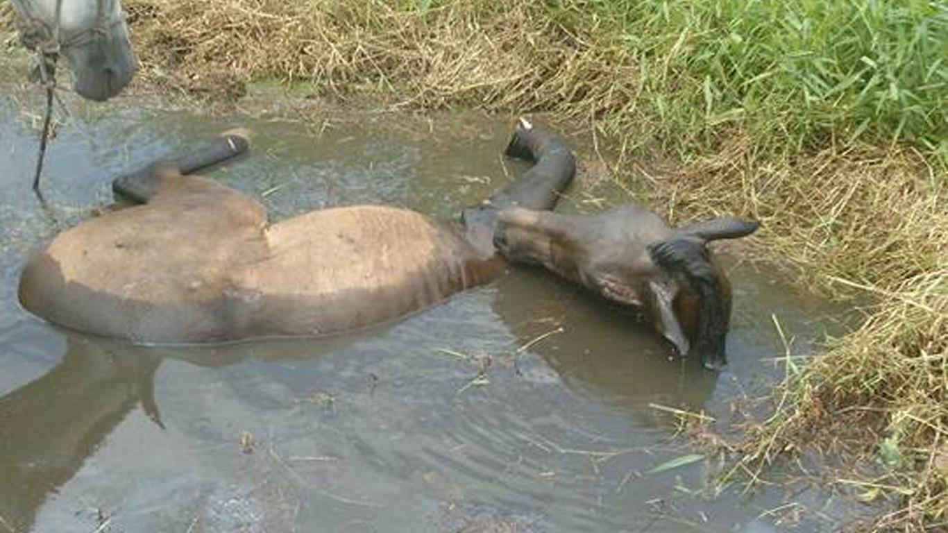 Photo of Maus tratos com os animais: Cena entristece Paranaguá