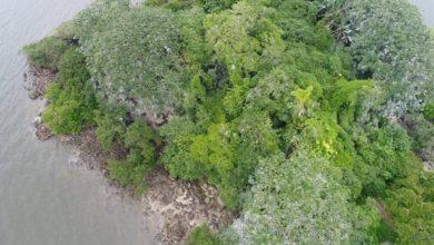 Photo of Ilha 'mal-assombrada' no Litoral esconde cemitério indígena e intriga cientistas