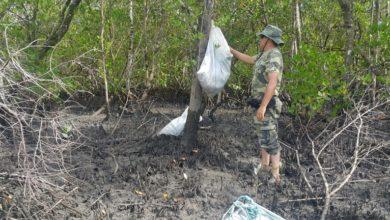 Photo of Polícia Ambiental apreende 3400 laços utilizados na pesca irregular de caranguejos