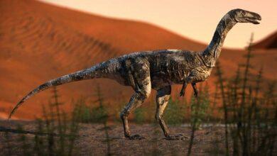 Photo of Espécie inédita de dinossauro é encontrada no Paraná