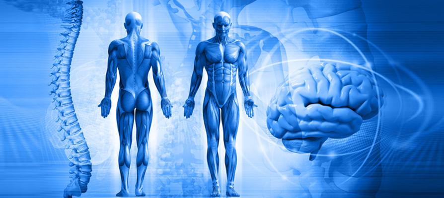 Scientific Basis of Acupuncture