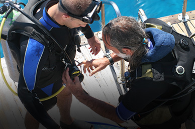 Divers look over each other's equipment before entering the water