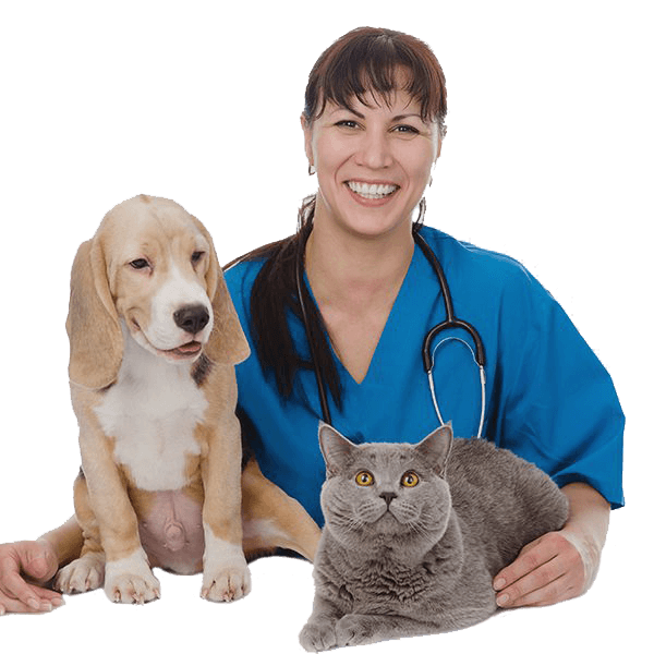 Veterinarian with dog & cat patients
