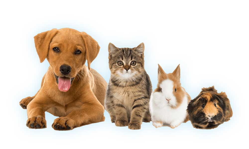 Various pets sitting & happy