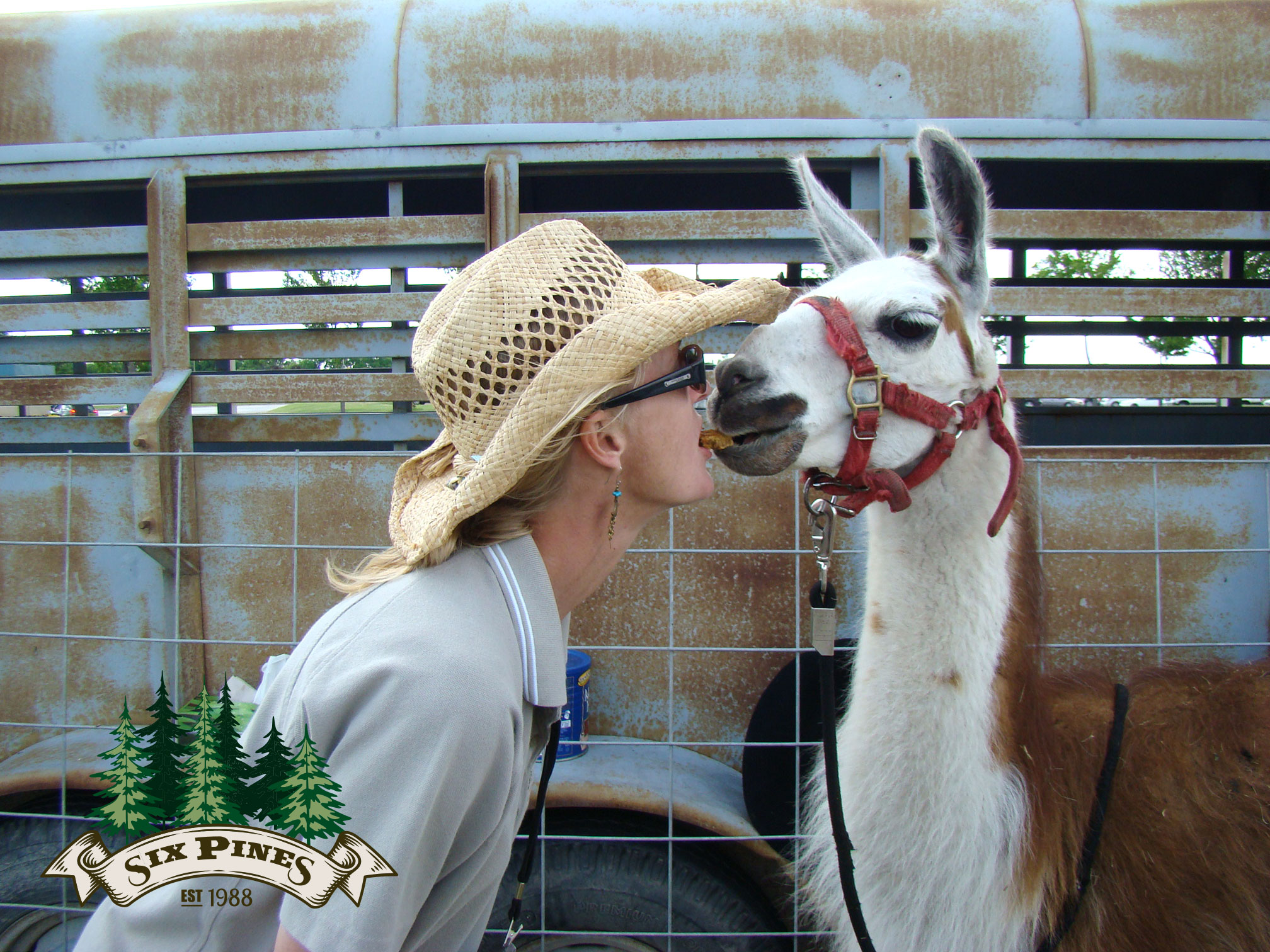 Six Pines Petting Farm