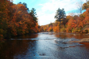 River flowing through trees in autumn
