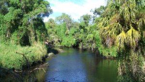 River with overhanging vegetation