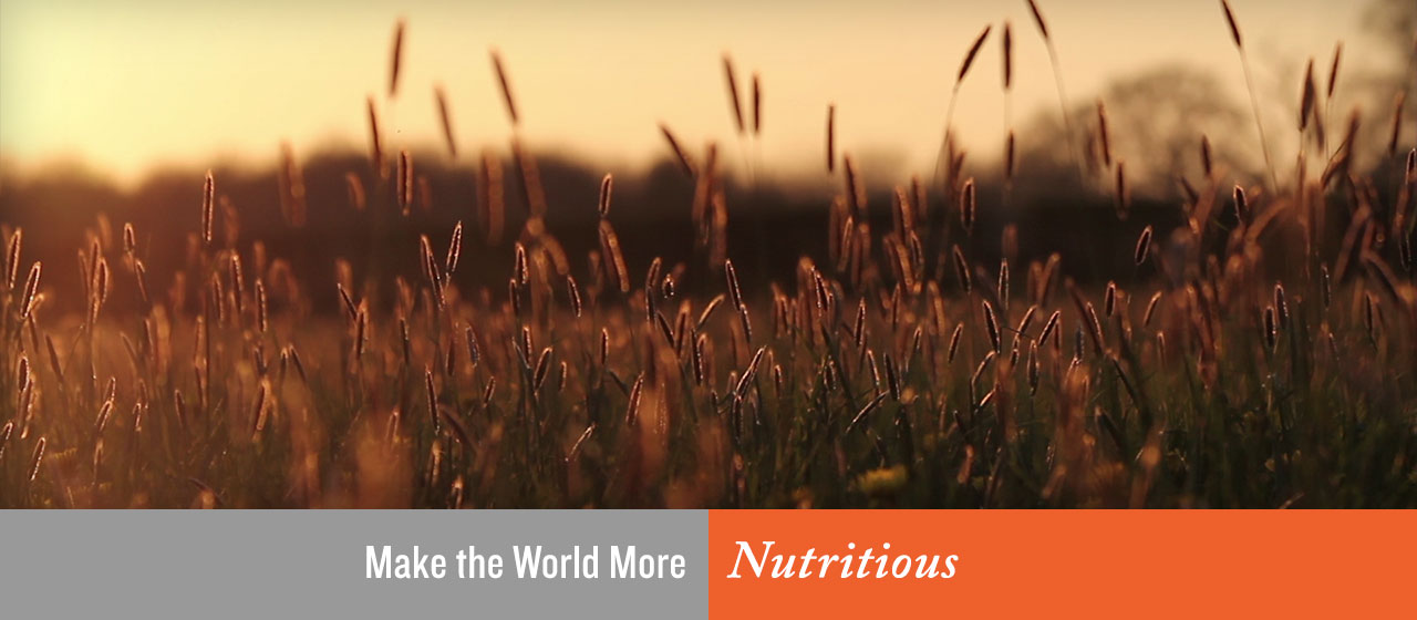 Make the World More Nutritious