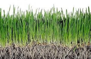 grass-roots-12974452
