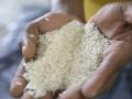 Le riz ti malice