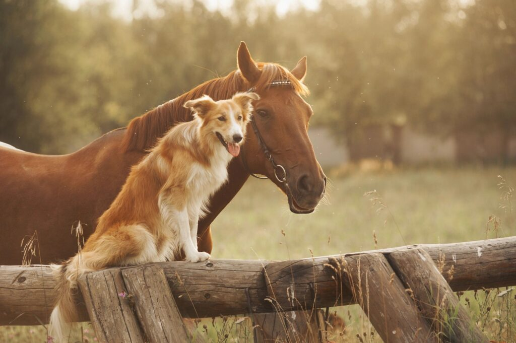 forc waimea ranch country