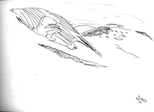 Road tripThrough the Windschield 18