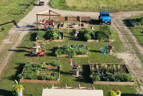 prog-garden