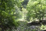 sunlightwoods_180 (1)