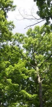trees_180