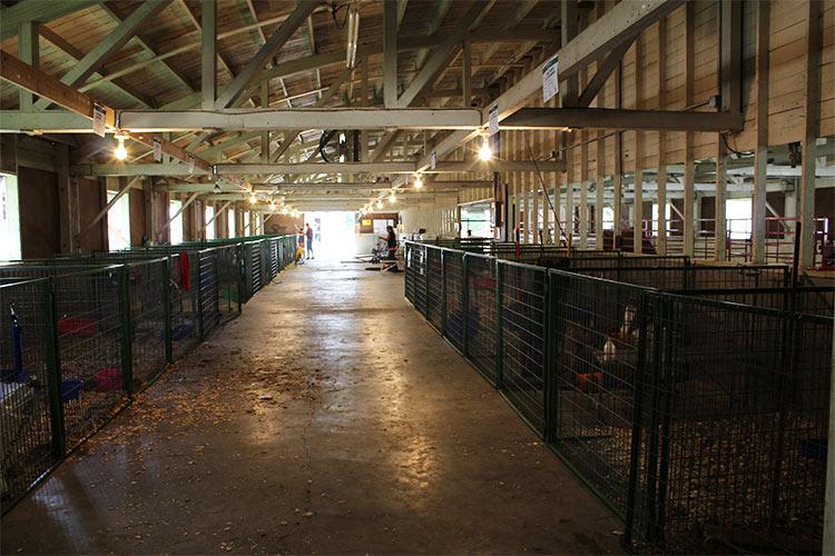 inside of cattle barn