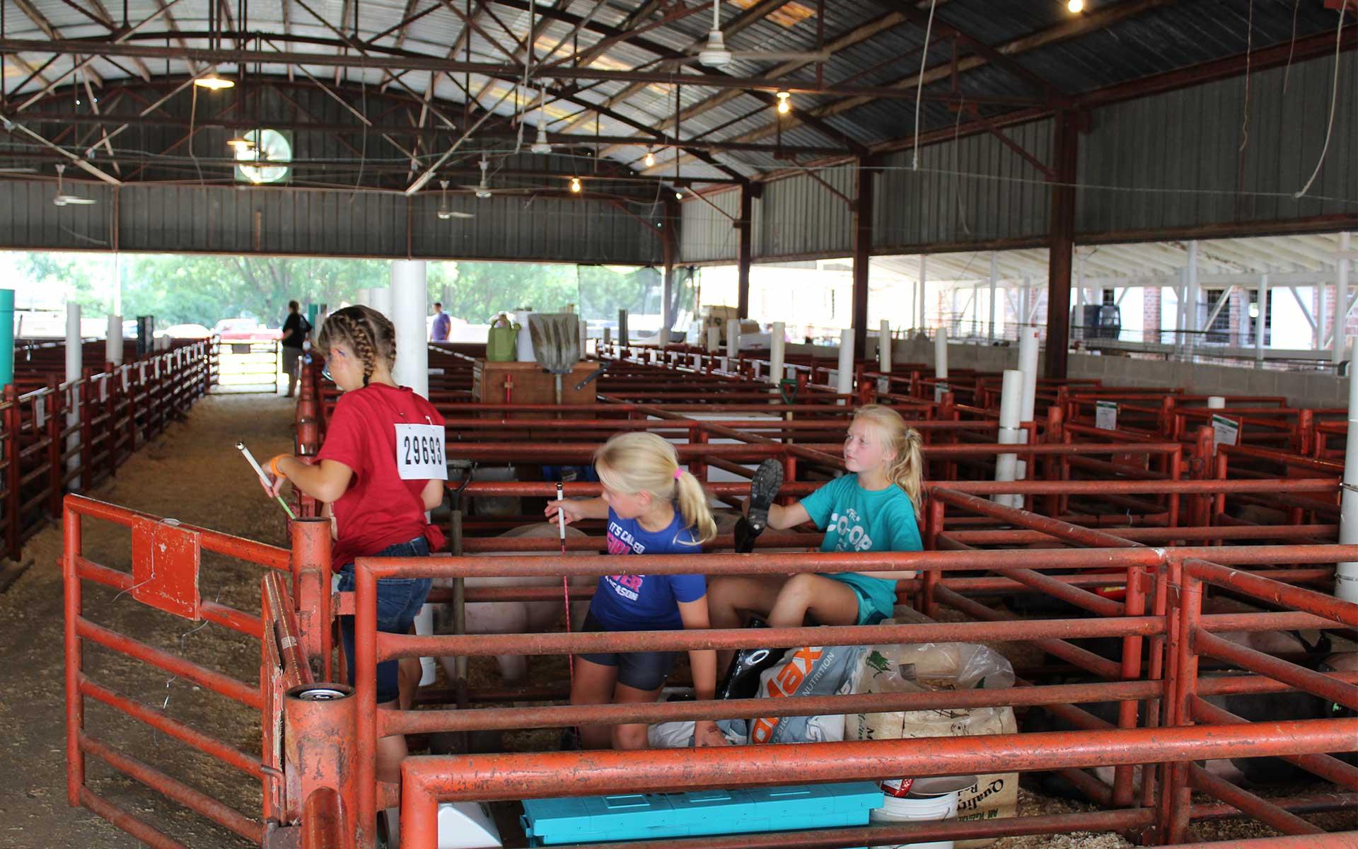 girls in livestock barn at fair