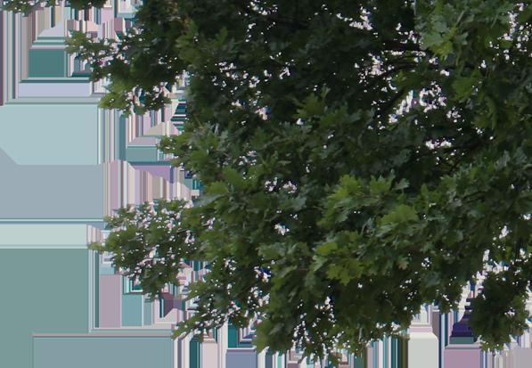 Tree | Estate Atlanta