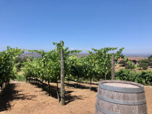 Ramona Wineries