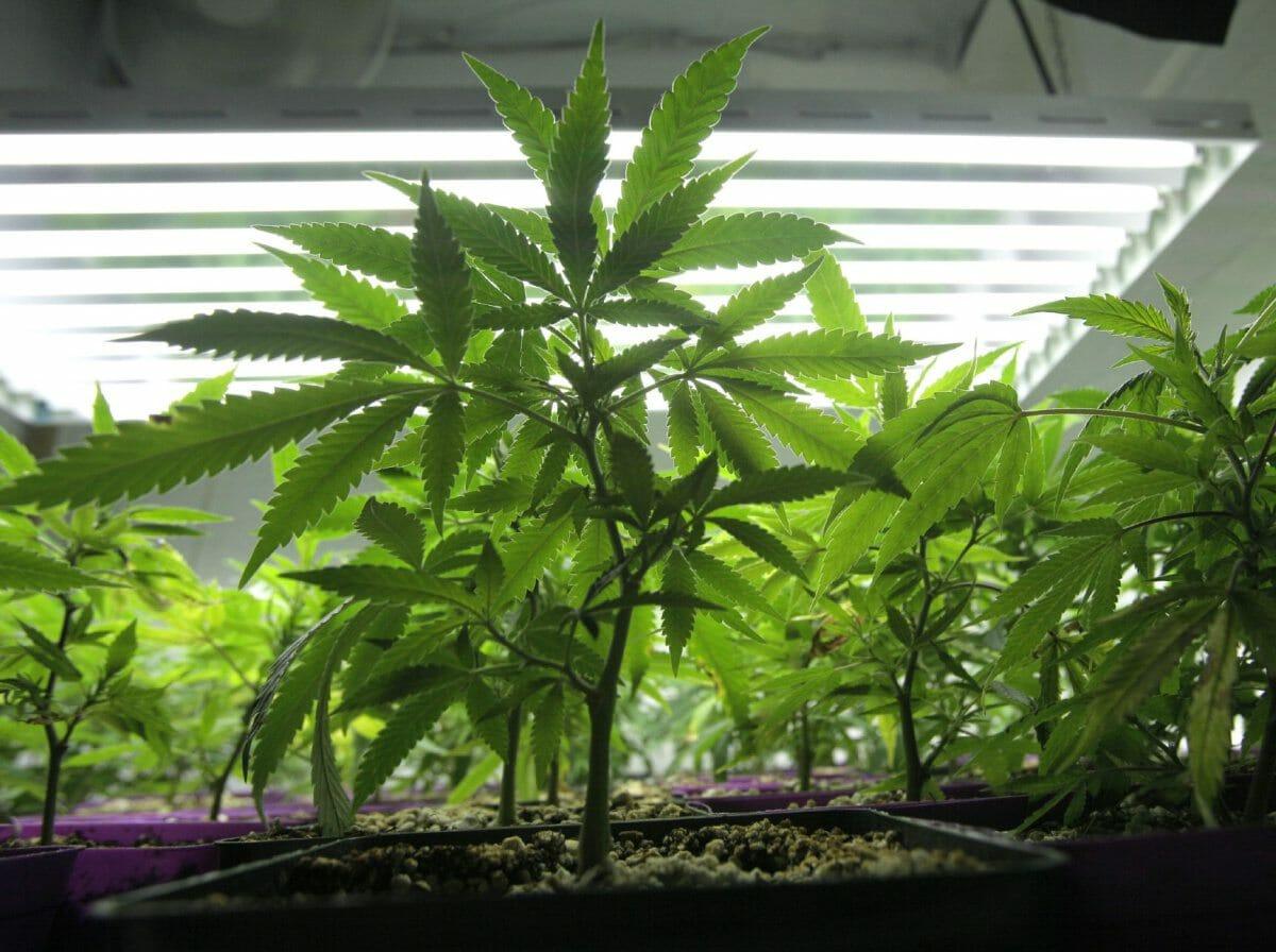 CFSEU-BC Shuts Down Four Sophisticated Marijuana Grow Ops