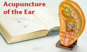 Plastic ear and textbook