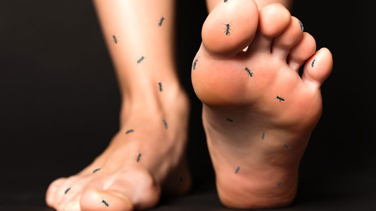 Feet with ants crawling on them
