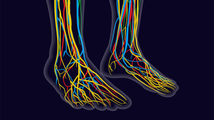 Nerve diagram in feet