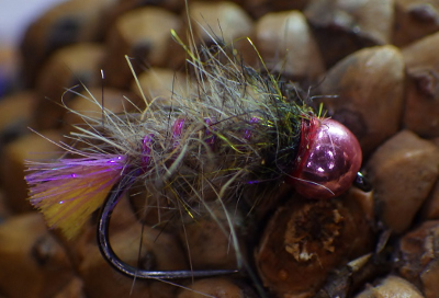 Grayling Bug
