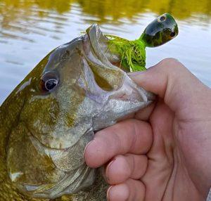 Ethan Smallmouth Bass Upper Grand River EEE