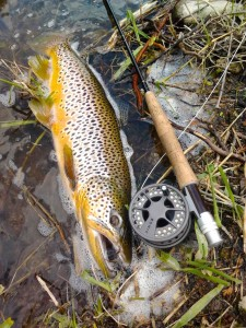 Grand River Brown Trout Lamson Konic Fly Reel A