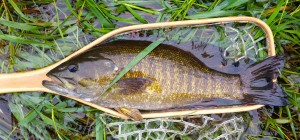 Grand-River-Smallmouth-Bass-Randy-Olive-Wooly-Bugger-AAA