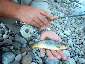 Hardy Fly Reel and Brown Trout Resized for web