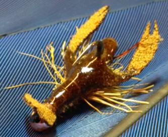 ARM Crayfish