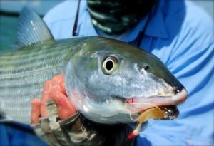 Saltwater Bonefish Flies